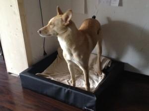 Relaxoo Hundebett Test