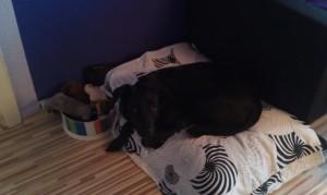 Shiva Produkttester Relaxoo Hundebett