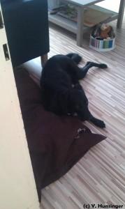 Test Relaxoo Hundebett