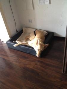 Produkttest Relaxoo Hundebett