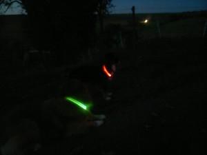 Test-Wolters-Hunde-Leuchthalsband-Nightshift von Angelina