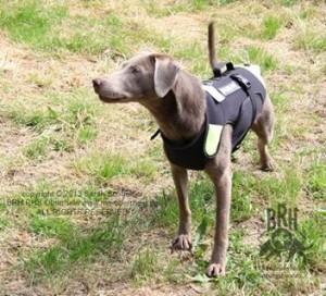Julius K9 Neopren Hundeweste