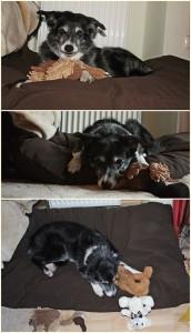 Flo testet das orthopädische Hundekissen