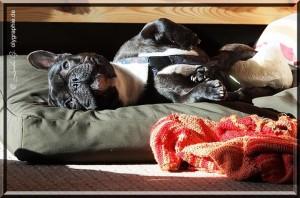 pssssst.....!!! Karlie testet das orthopädische Hundekissen ;-)