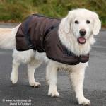 Braucht der Hund Kleidung?