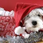 Weihnachtsplätzchen für den Hund