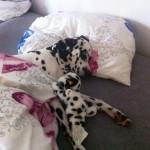 Darf der Hund mit ins Bett?