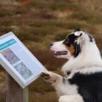 Tierpsychologen und ihre Arbeit – manchmal braucht man einen Pfotenwink