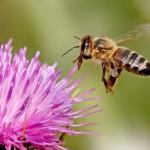 Erste Hilfe bei Insektenstichen