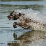 Badezeit! – Badezeit? Wie gewöhne ich meinen Hund daran ins Wasser zu gehen