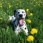 Die Hundezunge – mehr als nur ein Temperaturregler