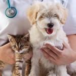 Ein Hund muß in die Tierklinik – Gefühle eines Halters – ein langer Tatsachenbericht