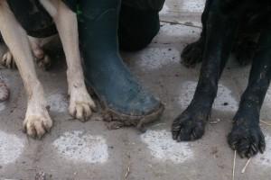 """Nach etlichen Stunden auf dem Hundeplatz: """"Tierisch gut, der Nora Champion :)"""""""