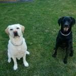 Produkttest Naturavetal Hundefutter
