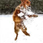 Schnee fressen – Kälteangriff auf den Hundemagen