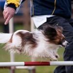 Gute Vorsätze im Zusammenleben mit dem Hund