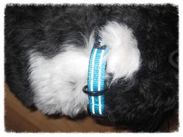 Alcott Halsband