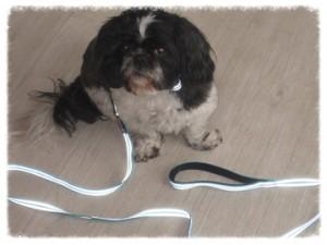 Alcott Test Hundeleine