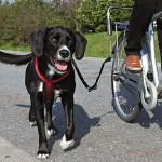 Mein Hund, das Fahrrad und ich