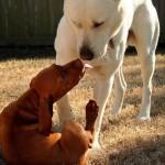 Hund leckt Welpe