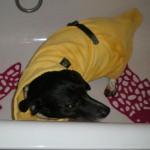Petra hat den EQDog Doggy Dry Hundebademantel getestet
