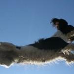 Flyball – maximaler Spass für Hund und Halter