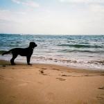 Camping mit dem Hund – So wird der Urlaub perfekt