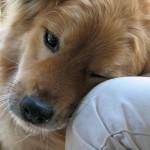 hund liebt menschen