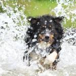 Abkühlung in der Hitze – Was hilft meinem Hund?