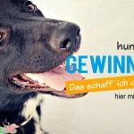 Gewinnspiel Teste Dein Hundewissen