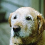 Wissenswertes über Hunde im Alter – Teil 1