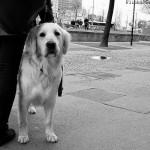 Ein Hundeleben in der Stadt