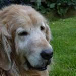 Wissenswertes über Hunde im Alter – Teil 2