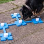 Kreative Freizeitbeschäftigung für den Hund – Mit Hunden spielen Teil 1