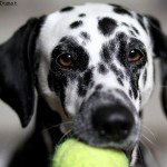 Kreative Freizeitbeschäftigung für den Hund – Mit Hunden spielen Teil 2