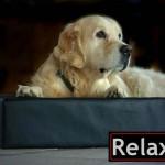 Relaxoo Hundebett – Hommage an einen Bestseller